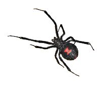 Black Widows Control Roseville CA 95678