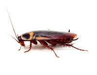 Roaches Control Roseville CA-95661